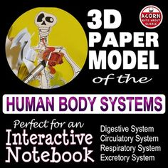 Human Anatomy Paper Model  Virtual Dissection. This is an easy to assemble 3-D paper model of the digestive, circulatory, respiratory and excretory system and of course the skeleton. This is ideal for an interactive notebook, differentiation and revision. When it's complete the students can knifelessly dissect a human body. They can see where and how the major organs are situated relative to one another. It's a very visually appealing resource. In addition it acts as a revision foldable when…