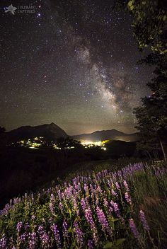 Lupine Blanket Under The Stars, Crested Butte, Colorado