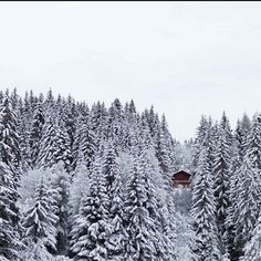 I miss the winter holidays at home!!❄❄⛄⛄