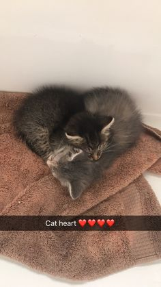 Two new babies by Janglez515 cats kitten catsonweb cute adorable funny sleepy animals nature kitty cutie ca