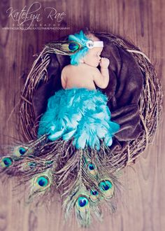 Peacock props for baby photos. Very creative idea