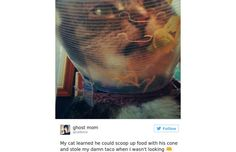 31 Hilarious Photos Of Cats From Twitter (Slide #1) - Pawsome