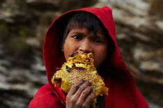 photos by andrew newey and eric valli of gurung tribespeople, who risk death to collect honeycomb from cliffs high in the foothills of the himalayas. precariously balanced on hand made ladders that...