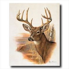 Whitetail Buck Deer Antler Rack And Doe Animal Wildlife Wall Picture Art Print
