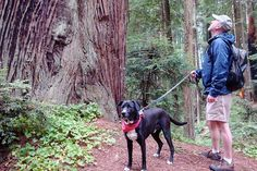 Matt Lang and his dog Dante on a redwood trail in Sequoia Park in Eureka, home of Carter House Inns. Photo: Richard Stenger, Redwoods.Info / SF