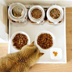 Pretty food tray for pets (DIY)