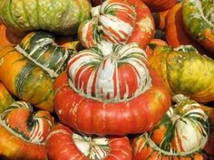 Colorful squash collection (Autumn 2008, Juckerfarmart, Zurich) Zurich, Squash, Pumpkin, Autumn, Colorful, Vegetables, Collection, Food, Pumpkins
