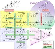 Cortisol - Wikipedia- :  Hypoestrogenism and MELATONIN supplementation increase cortisol levels in postmenopausal women.[86 ] CORTISOL increases Gastric Acid Secretion ;