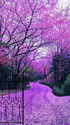 Wallpaper Nature Flowers, Beautiful Landscape Wallpaper, Beautiful Landscapes, Scenery Wallpaper, Beautiful Photos Of Nature, Beautiful Images, Amazing Nature, Beautiful World, Beautiful Flowers