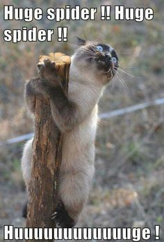 Very interesting post: TOP 99 Funny Cats Memes.сom lot of interesting things on Funny Animals, Funny Cat. Funny Animal Pictures, Funny Animals, Cute Animals, Animal Pics, Animals Beautiful, Cat Memes, Funny Memes, Funny Sayings, Tierischer Humor