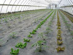 Organic High Tunnel Production