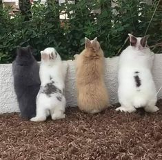 "Four little bunny butts all in a row. - Four little bunny butts all in a row. "" Four little bunny butt - Cute Little Animals, Cute Funny Animals, Cute Baby Bunnies, Cute Babies, Lapin Art, Amor Animal, Cute Animal Photos, Hilarious Animal Pictures, Animals Beautiful"