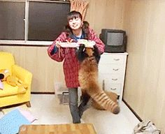 It's The Hungriest Red Panda We've Ever Seen