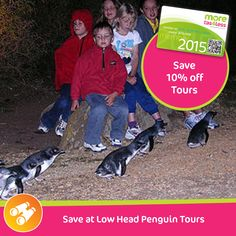 Save 10% off tours at Low Head Penguin Tours  see more, live more, save more in Tasmania with a moretas4less discount card .  For only $37 this little card can save you big dollars