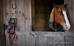 Wellington Florida is the Equestrian Capital of the World! If you are thinking about relocating to Wellington Florida contact me today! Country Farm, Country Life, Country Living, Happy Animals, Farm Animals, Wellington Florida, Farms Living, Draft Horses, White Horses