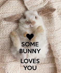 Some bunny loves you. ~ ♡