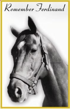 Ferdinand (3-12-83 – 2002) was a Thoroughbred who won the 1986 Kentucky Derby. He was voted the 1987 Eclipse Award for Horse of the Year. He entered stud in 1989 was sold to a breeding farm in Japan in 1994. Much to the outrage of horse racing enthusiasts, reports indicate that in 2002 Ferdinand was sent to slaughter in Japan with no fanfare or notice to previous owners. His death was the catalyst for the Ferdinand Fee, a program to fund keeping old racehorses alive.