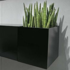 #Plant #plants #openbox #box #bathroom #storage #idea #bathroomideas #bathroomstorage #bathrooms #decor #decoration   Open box for Zero20 serie - 9 wide X 15-3/4 deep - 12 high