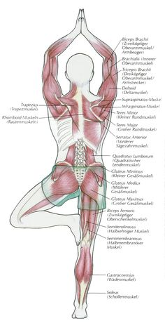 Yoga anatomy - vrksasana - tree pose