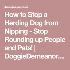 How to Stop a Herding Dog from Nipping - Stop Rounding up People and Pets! | DoggieDemeanor.com