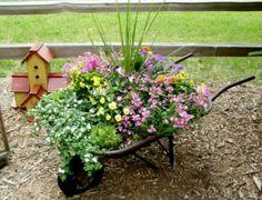 Wheelbarrow planter for the #frontyard #garden