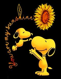 You are my sunshine. Snoopy and sunflowers. You are my sunshine. Snoopy and sunflowers. You are my sunshine. Snoopy and sunflowers. You are my sunshine. Snoopy and sunflowers. Snoopy Halloween, Snoopy Christmas, Halloween Quotes, Halloween Pictures, Funny Halloween, Halloween Kids, Images Snoopy, Snoopy Pictures, Baby Pictures