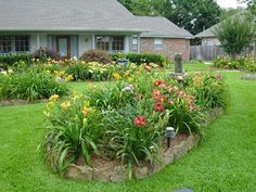 DAYLILLIES landscaping | Landscaping with daylilies