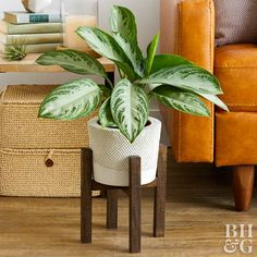 This easy project adds function and style to indoor plant decor.