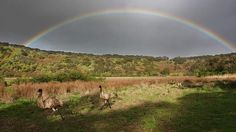 Tower Hill Reserve - Victoria, Australia