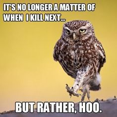 Owls: Punned and Dangerous