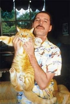 Freddie Mercury and a very lucky cat