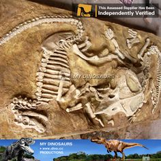 fossil pre-historico - Pesquisa Google