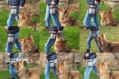 Hund übermotiviert