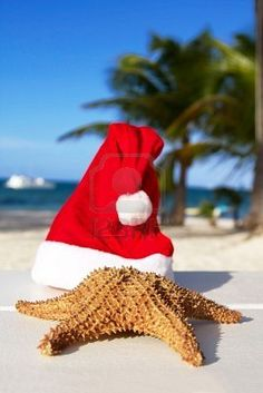 Christmas Starfish In Beach Chair. Royalty Free Stock Photo, Pictures, Images And Stock Photography. Summer Christmas, Tropical Christmas, Cottage Christmas, Coastal Christmas, Merry Christmas, Winter Holidays, Christmas Ideas, California Christmas, Christmas Landscape