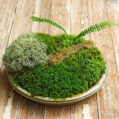 Container Gardening Ideas Add a little flavor to your table with this easy-to-do moss garden! - Make your own tabletop moss garden with these 5 simple steps! We even got good tips and tricks from moss expert, David Spain. Succulents Garden, Garden Plants, Succulent Planters, Hanging Planters, Cactus Plants, Air Plants, Indoor Plants, Indoor Herbs, Container Gardening
