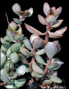 Planting Succulents, Succulent Plants, Cactus, Hardy Plants, Fairy Land, Gardening, Image, Digital, Natural