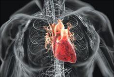 Виртуальное путешествие по бьющемуся сердцу