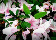 Flores em Petrópolis