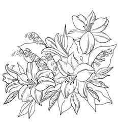 Adonis Flower Drawing adonis flower drawing images & pictures - nearpics