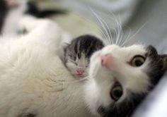 Don't wake my baby !