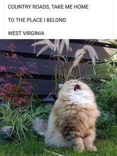 hilarious animals Lustigsten Tier Memes lustigsten TIERE Hunde Source by slweedman Funny Animal Memes, Cute Funny Animals, Funny Animal Pictures, Cute Baby Animals, Funny Cute, Funny Shit, Cute Cats, Funniest Animals, Funny Posts