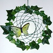 Ivy Stan catcher butterfly