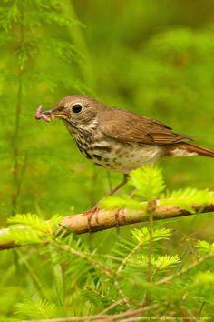 texas state bird mockingbird texas 1 no where else to be if