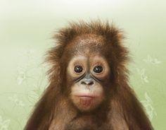 baby orangutan #monkey #baby #cute