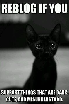 I have a black kitten and I love him with all my heart!!! He so sweet and I took pictures with him on Halloween and I would carry him around and be all like BOO! To people lol!