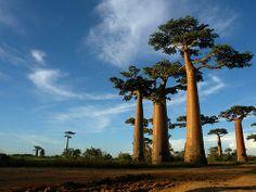 Discover Madagascar