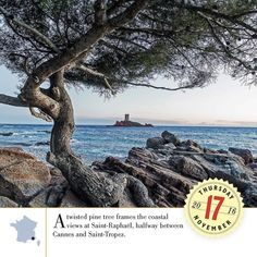 A twisted pine tree frames the coastal views at Saint-Raphaël halfway between Cannes and Saint-Tropez.  A Year in France 2017: http://ift.tt/2fJzfgk #travel #AYearInFrance #FranceTravel #InstaTravel #Wanderlust #TravelGram #BestoftheDay #Instagood #Traveling #Vacation #igtravel #instatravel