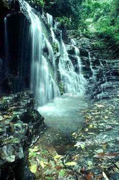 UNESCO World Heritage Site (Parque Los Katios) Los Katios National Park. in COLOMBIA