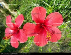 http://www.photaki.com/picture-two-red-flowers_53256.htm