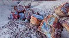 Petrified Forest  #Forest #Petrified #Trees #Wood